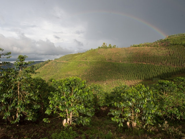 Rainbow over Arabica coffee farm outside Bwindi Impenetrable National Park. Photo Jo-Anne MacArthur, Unbound Project