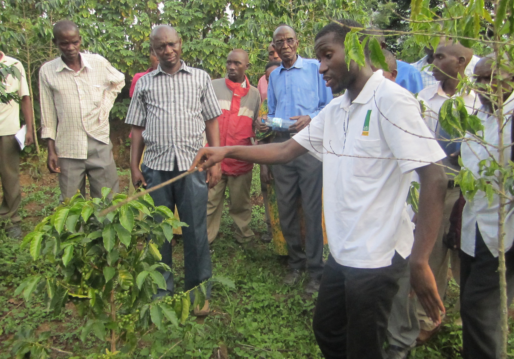 Gorilla Conservation Coffee plantation tour with the coffee growers, Bwindi