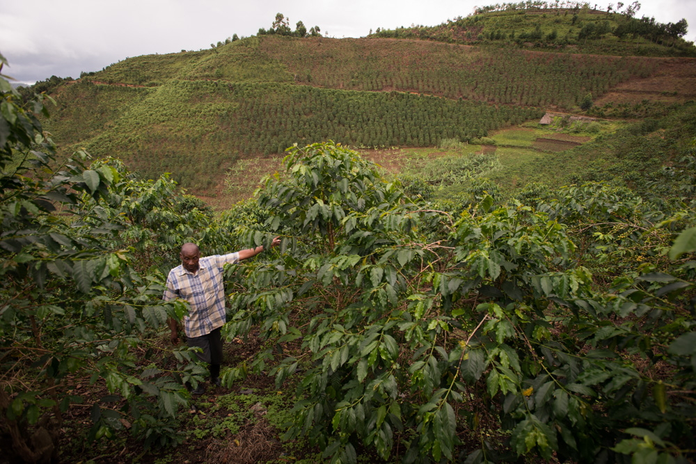 Lead Arabica coffee farmer, Bwindi Uganda. Photo Jo-Anne MacArthur, Unbound Project